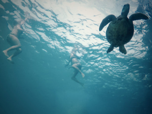 20160404-174917-turtle-1reduced