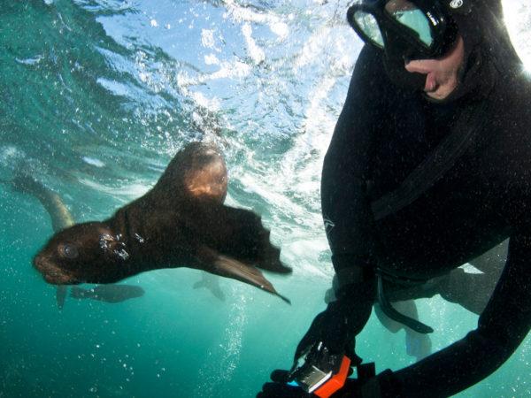 seal-snorkeling-animal-ocean-14reduced