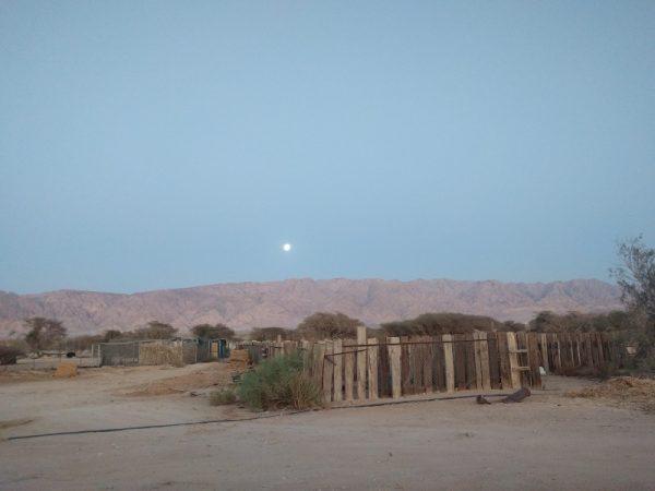 Hai Bar Yotvata, Southern Arava Desert, Israel.