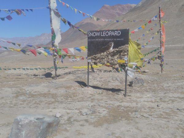 Snow Leopard trek of Ladakh in India